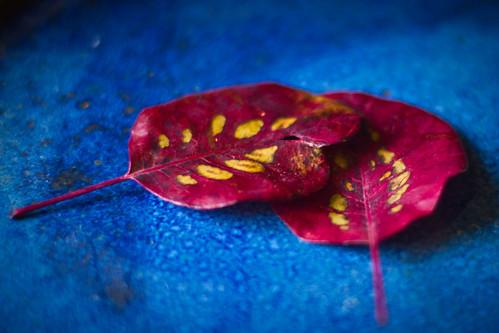 fall-0558