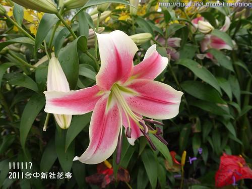 P1130154花海