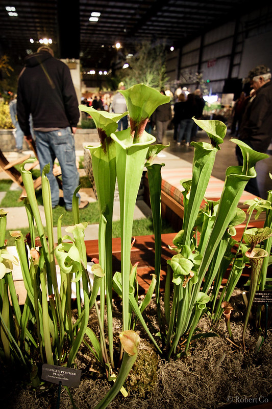 San Francisco Flower And Garden Show The Pitcher Plant Project