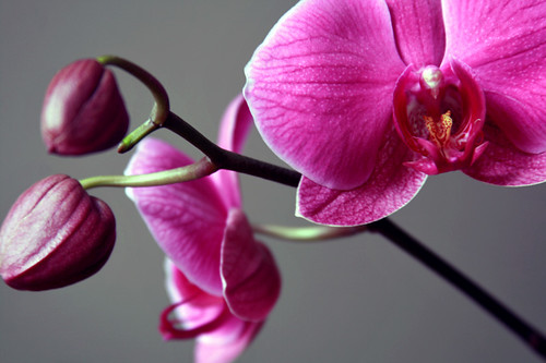 Orchids photo taken by jennifer cameron Glass Addictions
