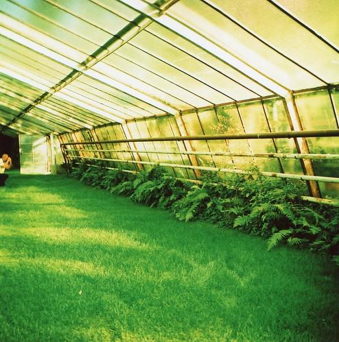 Greenhouse III