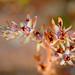 FlowerInEspersGarden1 by VillageFoto