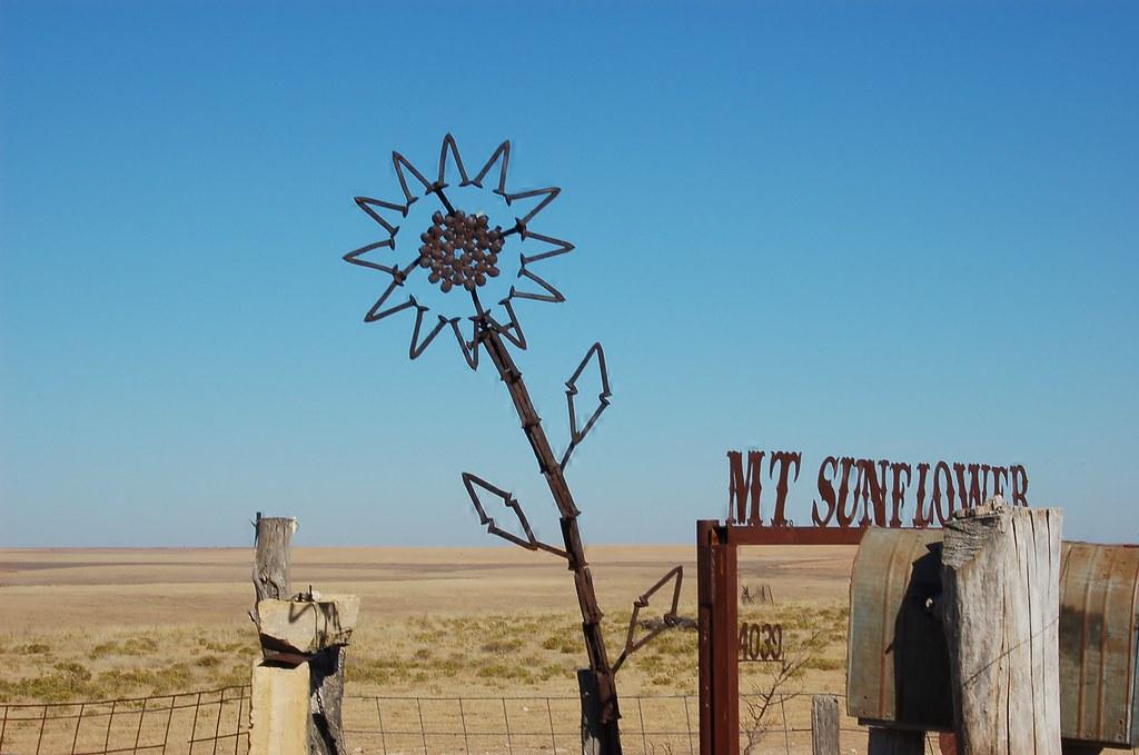 Sunflower at Mount Sunflower