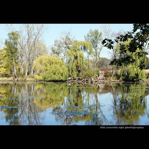 park autumn trees reflection nature water square design pond schaumburg thegalaxy springvalleynaturesanctuary sailsevenseas