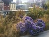 Flowers on the High Line