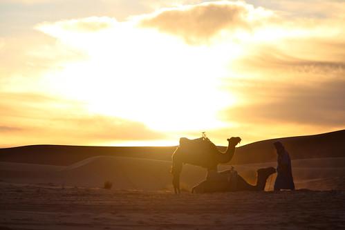 Travel Africa Erg Chebbi Morocco Desert Camel