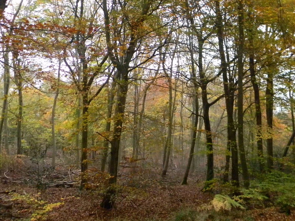 Autumn Colours 8 Princes Risborough to Great Missenden Monkton Wood