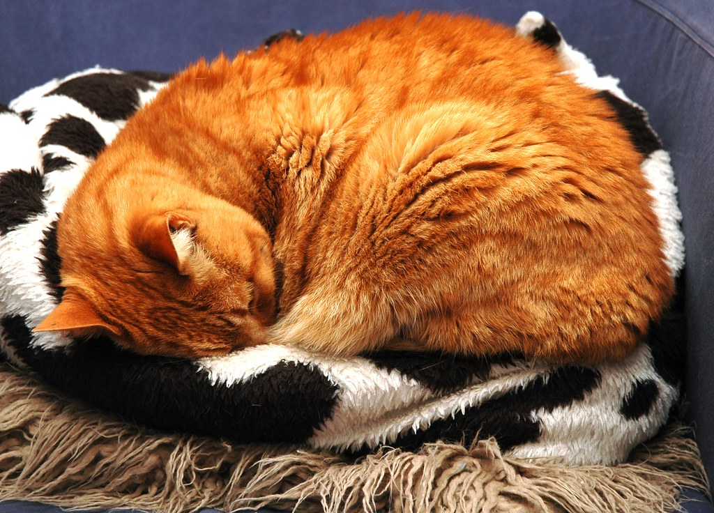 Sleeping Ginger Tom