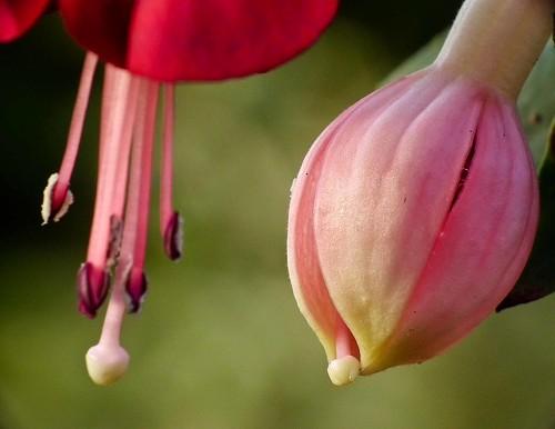 Blossming 2