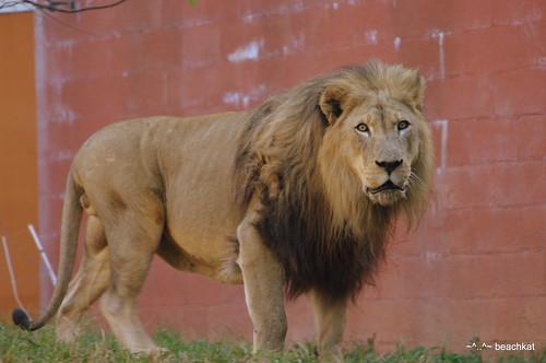 Kamau looks