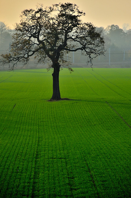 One tree Hill. By R J Watson (Explored)