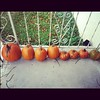 Where pumpkins are free