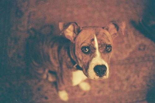 無料写真素材, 動物 , 犬・イヌ
