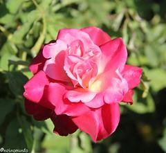 Rosedal