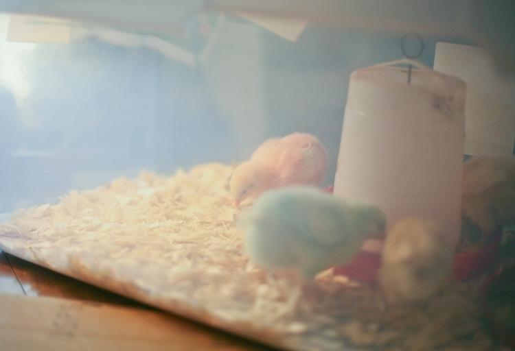 03-19-chicks1