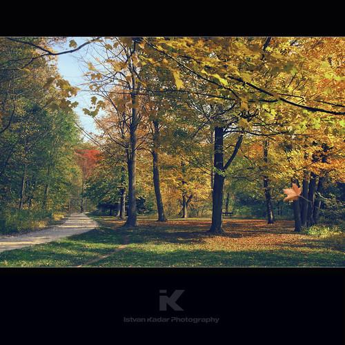 road park autumn toronto canada tree fall colors grass forest season maple path falling taylorcreekpark