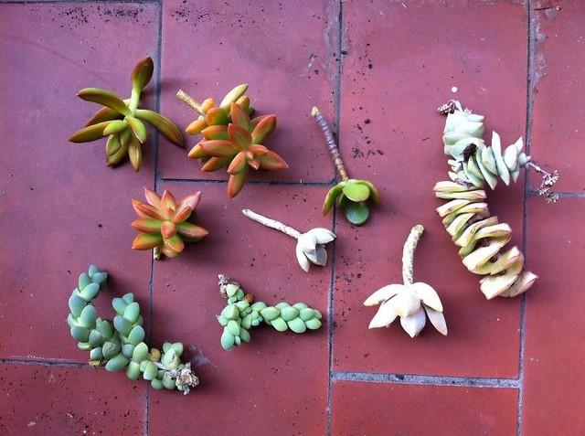 6a guerrilla ganchillo: plantbombing