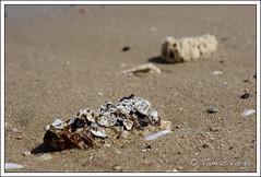 Flickr-13.jpg