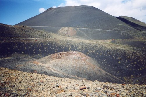 canarie_04