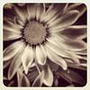 #flowers #weeklymarket