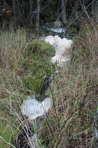 Strange Stream Foam