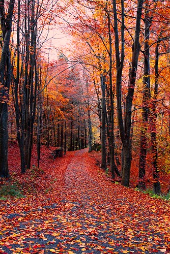autumn trees norway risør canonef24105mmf4lisusm canoneos50d bildekritikk roarstavelin nofk