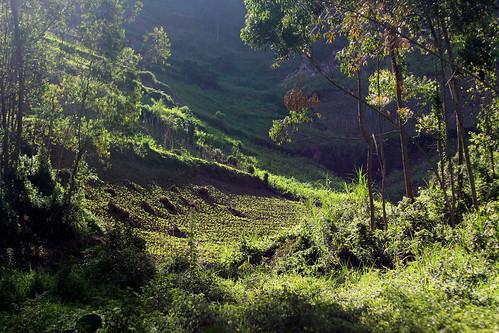 africa sun green bright rwanda crop adamcohn wwwadamcohncom