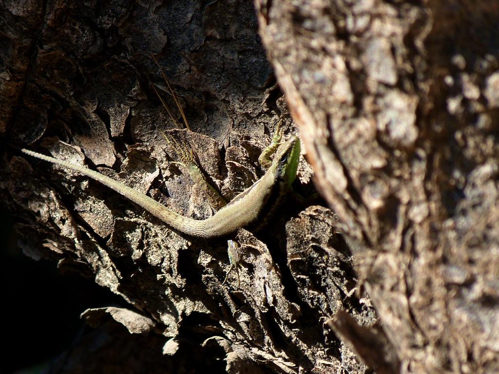 11-11-2011-lifta-lizard2