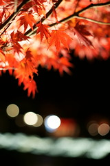 Lighting Momiji