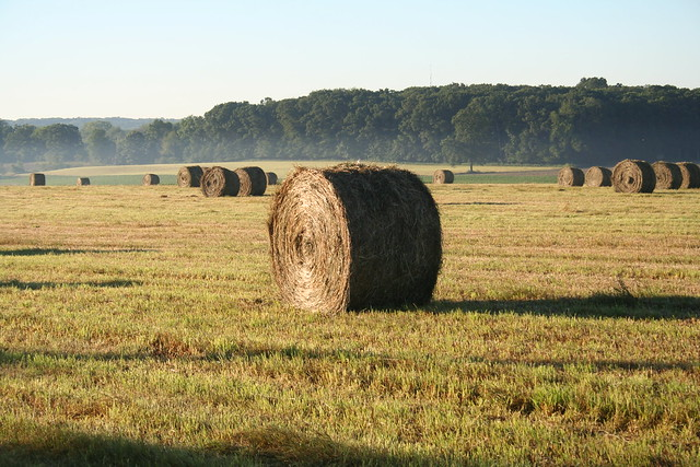Hay Bales in the Morning Mist, July 2010