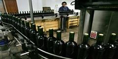 Cinco datos de la vitivinicultura que te van a sorprender