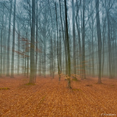 trees france tree nature forest canon landscape couleurs arbres 5d canon5d paysage arbre forêt feuilles picardie beauvais oise mandraque nivoliers pierrenivoliers gameofmind