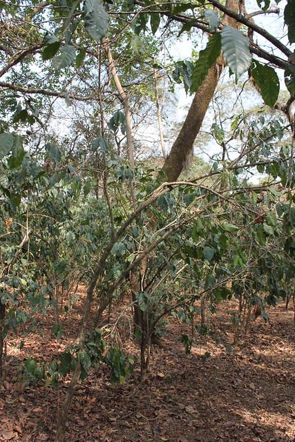 Natural pruning