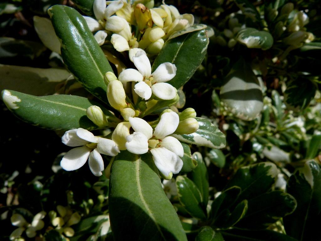 24-03-2012-spring-celebration-a5