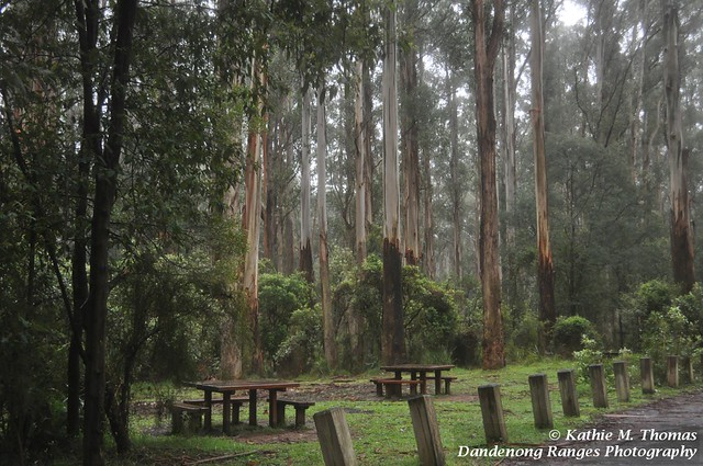 285-365 Picnic grounds at in the forest