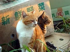 cat 047