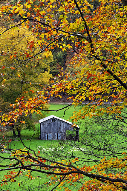 Autumn, Birch River Road