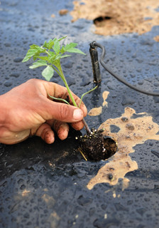 Ebb and Flow Hydroponics Gardening System