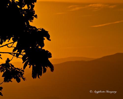 orange usa mountains nature leaves sunrise outdoors tn townsend