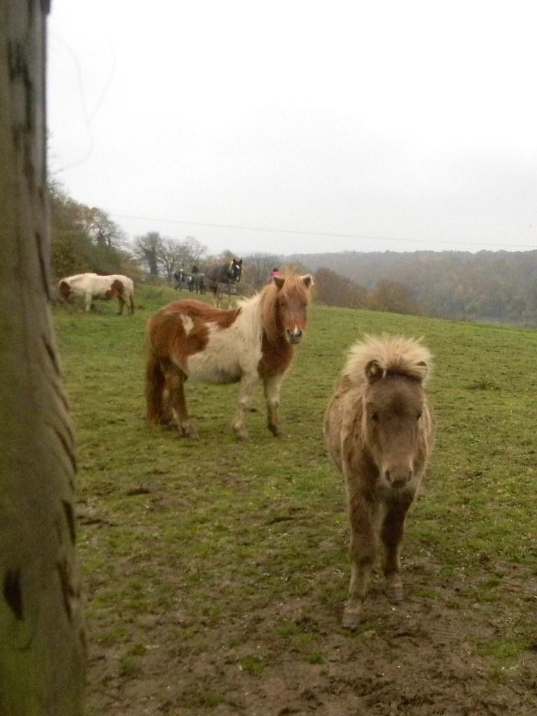 Little ponies Princes Risborough to Great Missenden