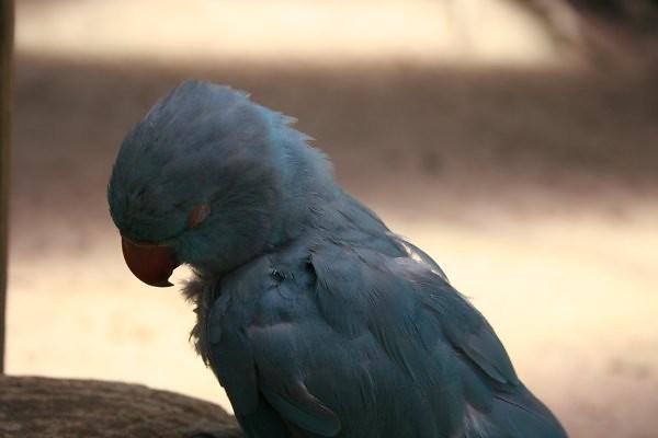 sleeping_bird