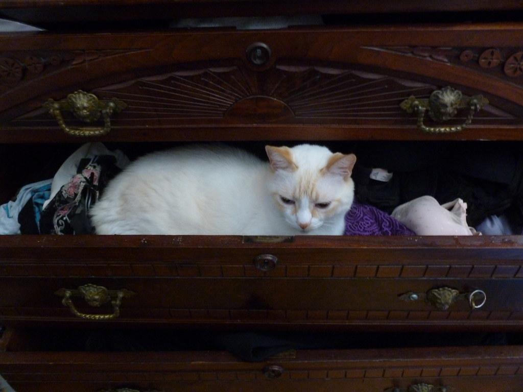 Kittens! Sept 2011