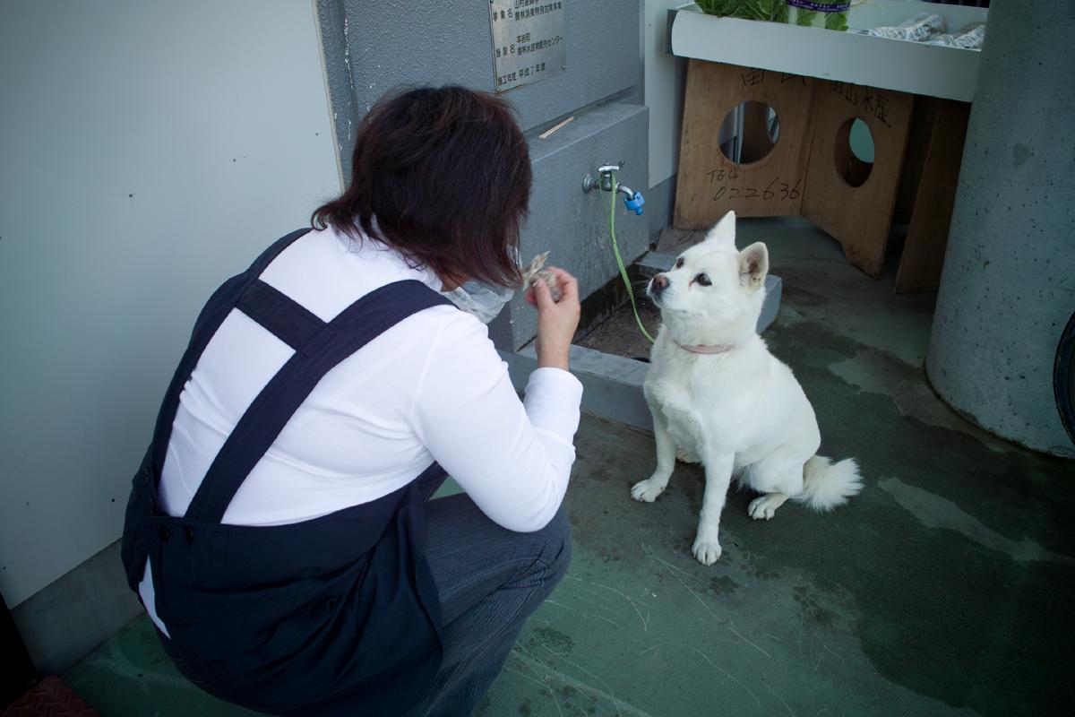 2011-11-12 道の駅大谷海岸(気仙沼市)