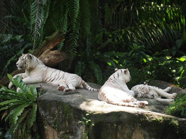 Singapore Zoo - 19 Nov