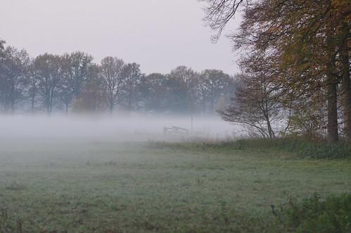 wood sunset mist fog forest zonsondergang nikon utrecht nederland thenetherlands meadow nikkor bos amelisweerd weiland bunnik 105mmmicro