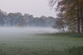 A meadow in Amelisweerd