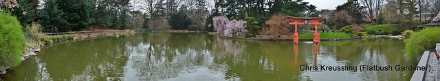 Panorama, Pond, Japanese Garden