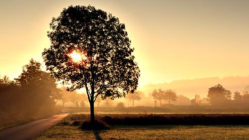 morning mist sunrise work canon way geotagged deutschland iso100 nebel f16 7d mehl sonnenaufgang deu tübingen badenwürttemberg 2470 hagelloch canon2470 1100s eos7d unterjesingen michaelmehl orgennebel geo:lat=4852267498 geo:lon=900972247 mehlname
