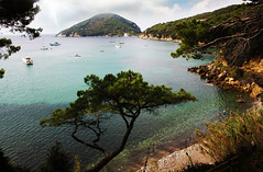 Viticcio - Isola d'Elba (LI)
