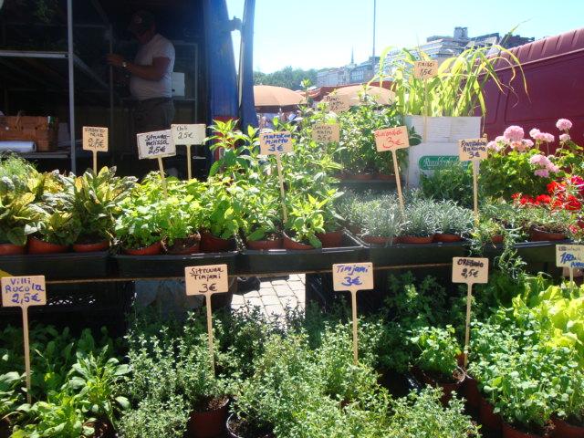 Selection of herbs on sale in the market in Helsinki